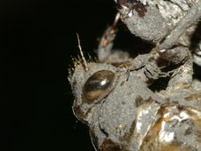 Free Eye Of A Cicada Nymph S Shed Skin Stock Images - 13895904