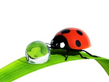 Free Ladybird. Stock Image - 13898591