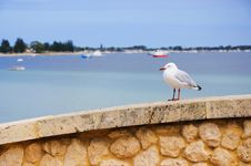 Free Sea Gull Sitting On A Wall Stock Photos - 13898713