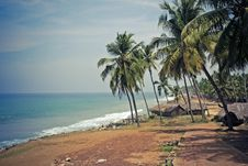 Free Narrow Path On The Beach Under Palms. Stock Photo - 13898810