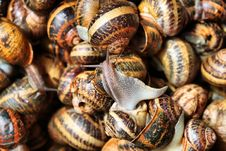 Free Snails Royalty Free Stock Photography - 13899367
