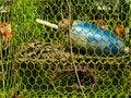 Free Abstract Crab Pot Royalty Free Stock Photo - 1392495
