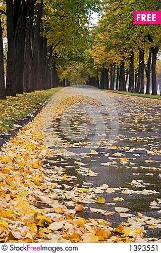 Autumnal linden alley 3 Stock Photo