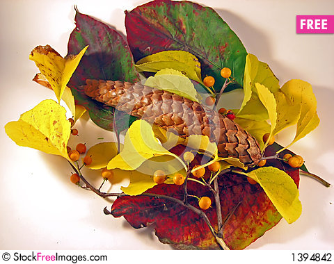 Autumn Leaves with Pine Cone Stock Photo