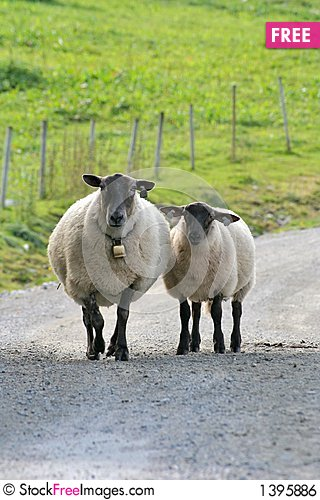 Along came a sheep Stock Photo