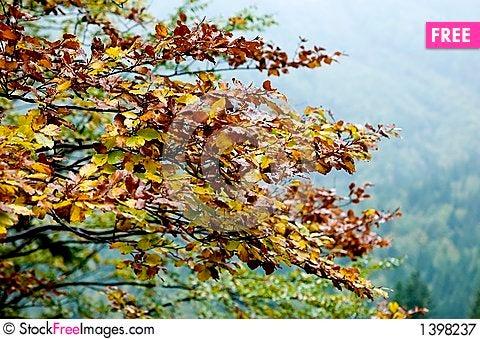 Tree in the fall season Stock Photo