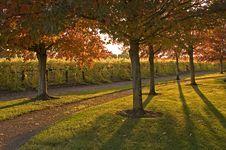 Free Autumn Scenic Stock Photography - 1390002
