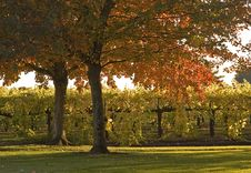 Free Autumn Scenic Royalty Free Stock Image - 1390016