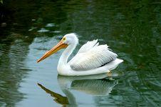 Free Stork Lake Stock Images - 1390104