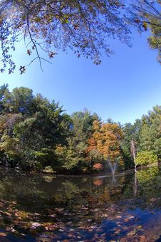 Free Pond And Fall Leaves With Wide Angle Royalty Free Stock Photo - 1390165
