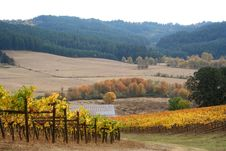 Free Autumn Vineyard Royalty Free Stock Photography - 1391177