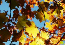 Free Autumn Leaves Stock Images - 1391324