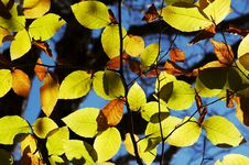 Free Bright Colorful Leaves Stock Photo - 1391420