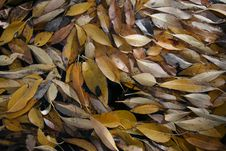 Free Leaves On Water Stock Photography - 1391522