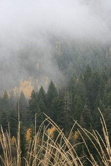 Free Grass Fog And Aspens In Fall 1 Stock Photography - 1391612