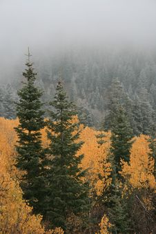 Free Early Snow And Fog In Fall 2 Royalty Free Stock Image - 1391626