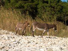Free Two Donkeys Stock Images - 1391734