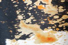 Free Fur Skin Royalty Free Stock Photo - 1391925