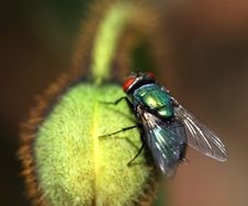 Free Lazy Fly On Flower Stock Photos - 1392043