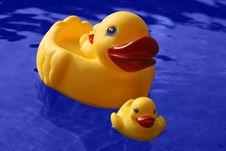 Free Ducks Royalty Free Stock Photos - 1392208