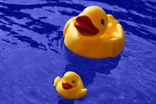 Free Ducks Stock Photo - 1392210