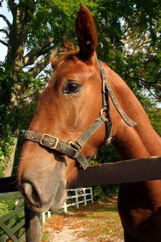 Free Horse Stock Photo - 1392220