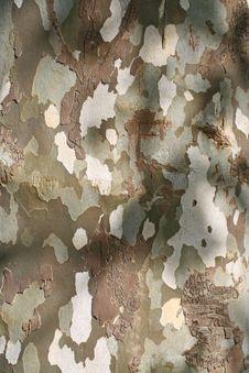 Free Bark Texture Stock Photography - 1392602