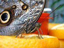 Free Butterfly On Orange Slice Stock Images - 1392644