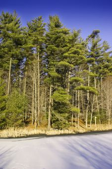 Free Forest Stock Photos - 1394673