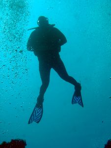 Diver Ascends Royalty Free Stock Images