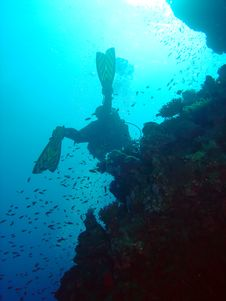 Free Diver And Coral Stock Photos - 1396543