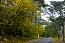 Free Road In Autumn Forest Stock Images - 1397184