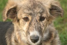 Free Sad Little Dog Royalty Free Stock Photo - 1397275