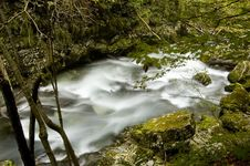 The River In The Forest Royalty Free Stock Photography