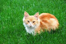 Free Cute Cat Royalty Free Stock Photo - 1397885