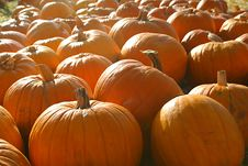 Free Pumpkins Royalty Free Stock Image - 1398126