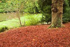 Free Autumn Stock Photos - 1398163