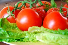 Free Lovely Tomatoes Stock Photos - 1398233