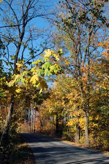 Free Autumn Woods Stock Photos - 1398553