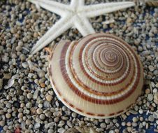 Free Shell Stock Photography - 1399002