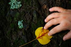 Free Bark Of An Tree With A Child Hand Stock Photo - 1399130