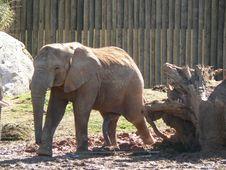 Free Happy Elephant Royalty Free Stock Photos - 1399488