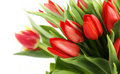 Free Bouquet Of Tulip Stock Photo - 13900010