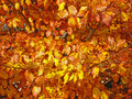 Free Autumnal Atmosphere Royalty Free Stock Images - 13900369
