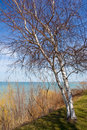 Free Lake Tree Stock Photo - 13902780