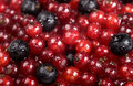 Free Red Currant And Black Currant Stock Image - 13903191