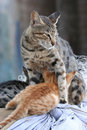Free Protective Cat Stock Images - 13903314