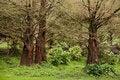 Free Tree Trio Stock Photo - 13908060