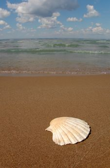 Seashell On Sand Stock Images