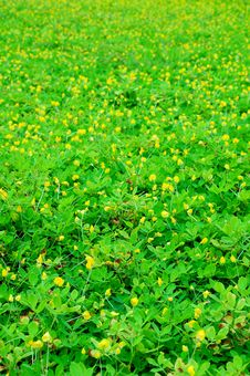 Free Yellow Flower Field Stock Image - 13900261